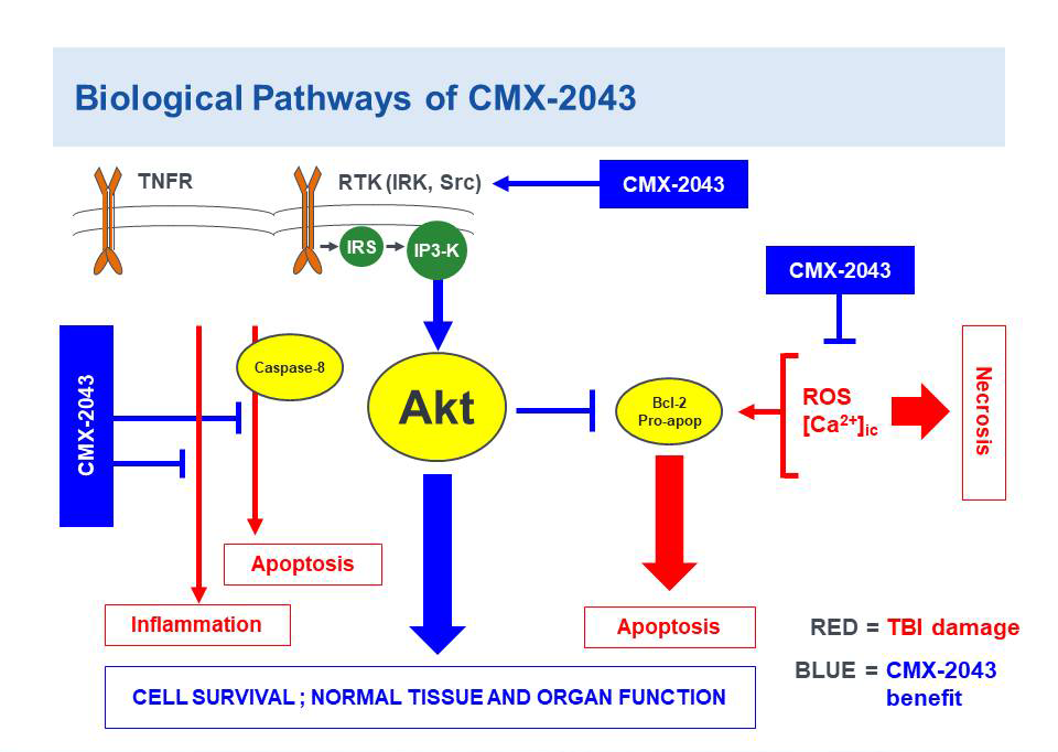 Biological Pathways of CMX-2043 in Traumatic Brain Injury